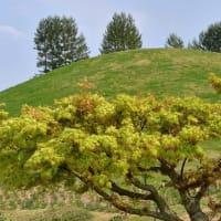 4918 丘の樹