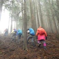 2020年3月29日(日) [美杉]学能堂山 石名原のミツマタ大群落は満開。白いショウジョウバカマも!