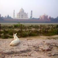 不思議の国インド 6