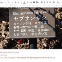 ヤブサンザシ - 愛知県緑化センター