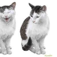 河原の野良猫 表情豊かなゾウイ