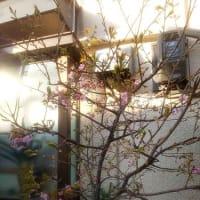 いろいろ草花日記 10