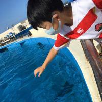 沖縄旅行3日目:美ら海水族館
