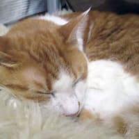 5月30日(土) ~猫の麦とごまの日常日記~