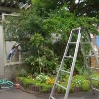 9/15 台風15号の後の花壇の作業