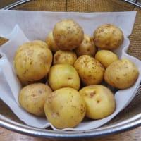 キタアカリでジャーマンポテト!・・・ジャガイモ ドイツ料理