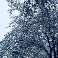 免疫力を高める生活習慣! 雪景色(⋈◍>◡<◍)。✧♡