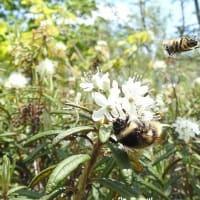 つつじヶ原の上空は… Bees