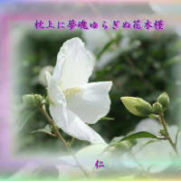 『 枕上に夢魂ゆらぎぬ花木槿 』物真似575zqr1905