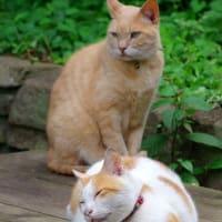 日暮れどき佇む猫たち