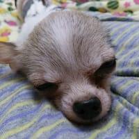 起きない・・