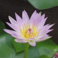 半田山植物園の花 ②