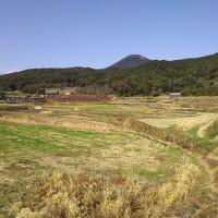 初冬のマコモタケ田圃