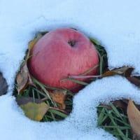りんごエレジー