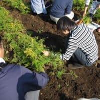 東京有機収穫祭