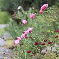 8月2日火曜 午後の庭