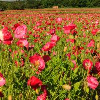 花の都公園は花盛り
