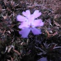 春が近づいています(^^♪