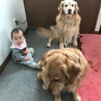 お孫ちゃんと猛獣達^ ^