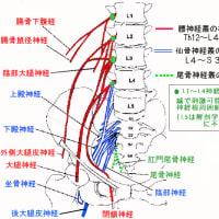 末梢神経性「シビレ」の診かたと鍼灸治療 ver.1.1
