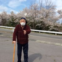 🌸桜満開🌸お花見に行きました♬