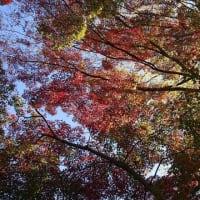 #405 -'20. ご近所の秋を見~つけた。