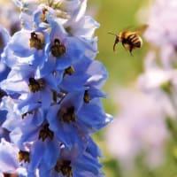 ●蜂は蜜を求め、推進派は E=MC^2 を求める
