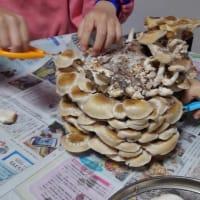 ブロック椎茸収穫祭