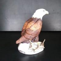 白頭鷲の子供