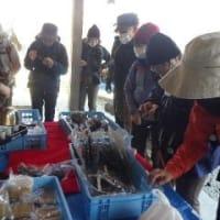 2021年3月3日(水) [西吉野]津越のフクジュソウと、大峰主峰が望める柚野山へ!