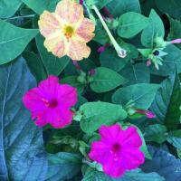 青空と夏の花(⋈◍>◡<◍)。✧♡
