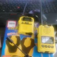 本日の黄色い集め