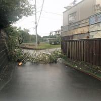 ◆最強級台風15号の爪痕~夜中の暴風は恐ろしかった