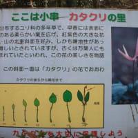 群馬フラワーハイランド・小串のカタクリ