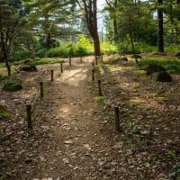 初秋の森林公園(ケイトウ広場)