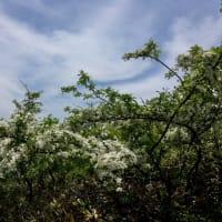 お花に包まれた野反湖♪(^_^)