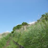 足柄上郡「大野山ハイキング」周回コースを行く 前編