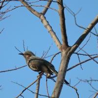 鶴見緑地の小鳥達 ブラブラ~フォト