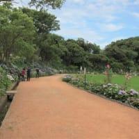 アジサイの二本松寺(潮来市)…中世嶋崎城の出城でした