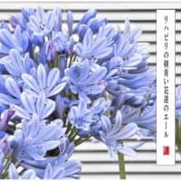 青い花のエール