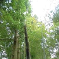 脳の皺眠り増やして竹の皮