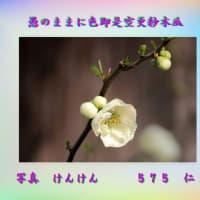 『 愚のままに色即是空更紗木瓜 』言葉あそび575交心xyx0201