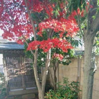お庭の枝折戸に、、、