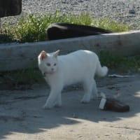 岸壁のネコ 3