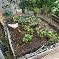 お庭デビュー❤
