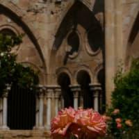スペイン紀行(5) タラゴナ⑤ タラゴナ大聖堂2