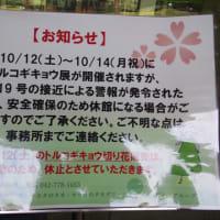 相模原公園で綺麗なきのこ発見2019/10/10