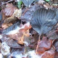 黒い落ち葉