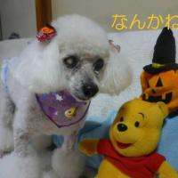老犬ラスさんの訳ありトリミング (*´∇`*) そして台風20号