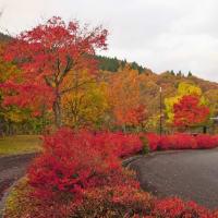 紅葉の深入山へ